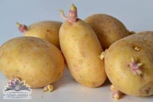 بالصورة : حيلة قديمة لا تفشل أبدآ لمنع البطاطس من أن تبرعم والأحتفاظ بها لأطول فترة ممكنة  بحالة ممتازة
