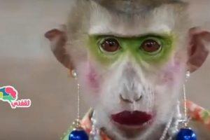 بالفيديو.. شمبانزي تضع الماكياج وتجلس كالفتاة الخجولة