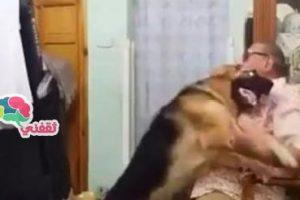 بالفيديو.. رجل مصري يجعل كلبه يعتذر له بطريقة مدهشة