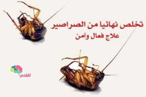 وصفة سريعة للتخلص من الصراصير نهائياً