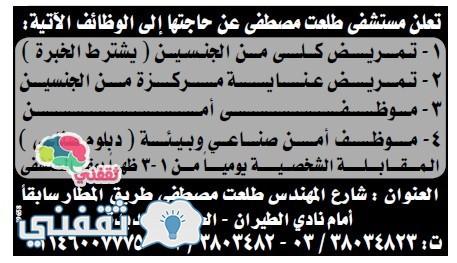 وسيط الاسكندرية 8