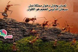 بالفيديو : أفعى ضخمة تهاجم مملكة للنمل .. شاهد ماذا فعل النمل بالثعبان .. لن تصدق