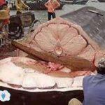 لماذا كبد الحوت هو أول طعام أهل الجنه سبحان الله مفاجأة مذهله