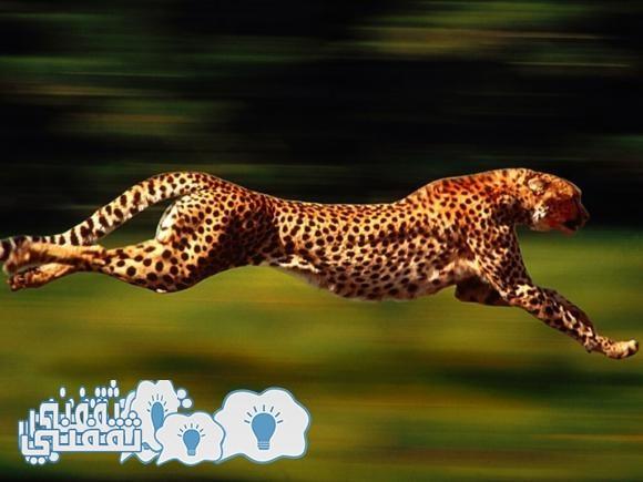 نمر الجاكوار