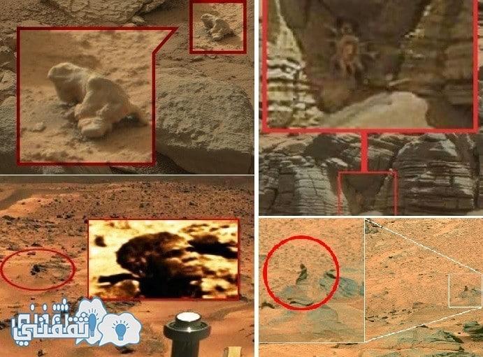 صخره من صخور المريخ ام وجه اوباما