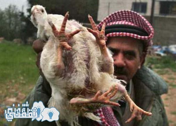 دجاج المطاعم الشهيرة