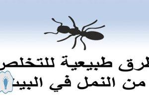 طرق صحية وفعالة للتخلص من النمل بالمنزل مع اقتراب فصل الصيف