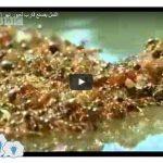 بالفيديو   النمل يصنع قارب لعبور نهر الأمازون – سبحان الله