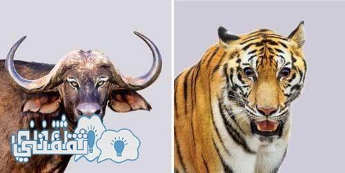 تبديل عيون الحيوانات