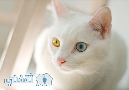 cat-a127462e5a5fb797c5645848f783def7_h