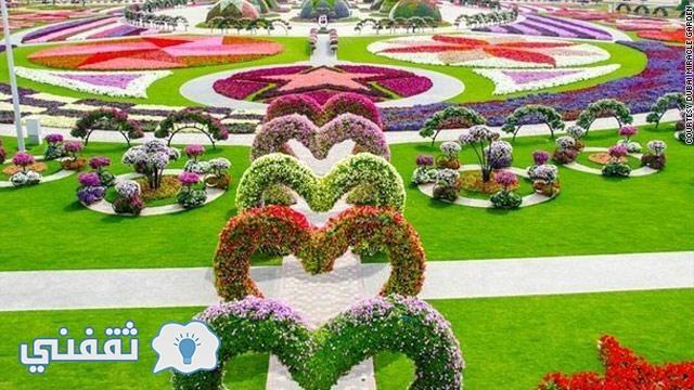 gal.dubai.miracle.garden.jpg_-1_-1