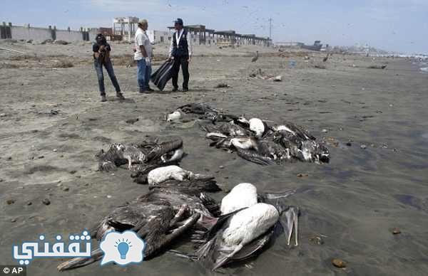 موت-الطيور
