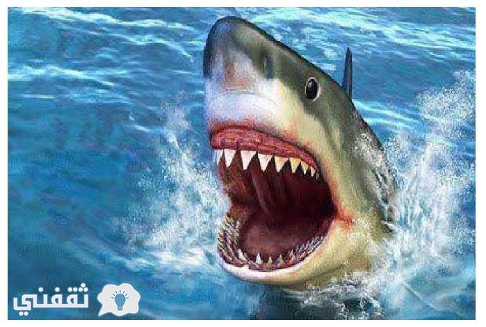 شاهدوا لحظة خروج سمكة القرش من البيضة في لقطة نادرة