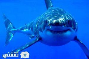 عاجل | سمكة قرش ضخمة تأكل قدم طالب بأحد شواطئ العين السخنة