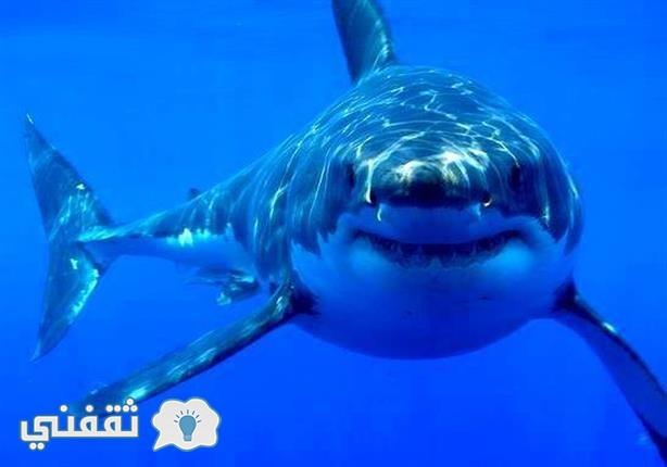 سمكة قرش تهاجم طالب