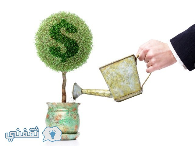Finance_Wallpapers_Money_Tree_015905_29