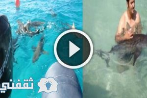 شاهد بالفيديو شاب كويتي يهوى السباحة مع أشرس أنواع القروش