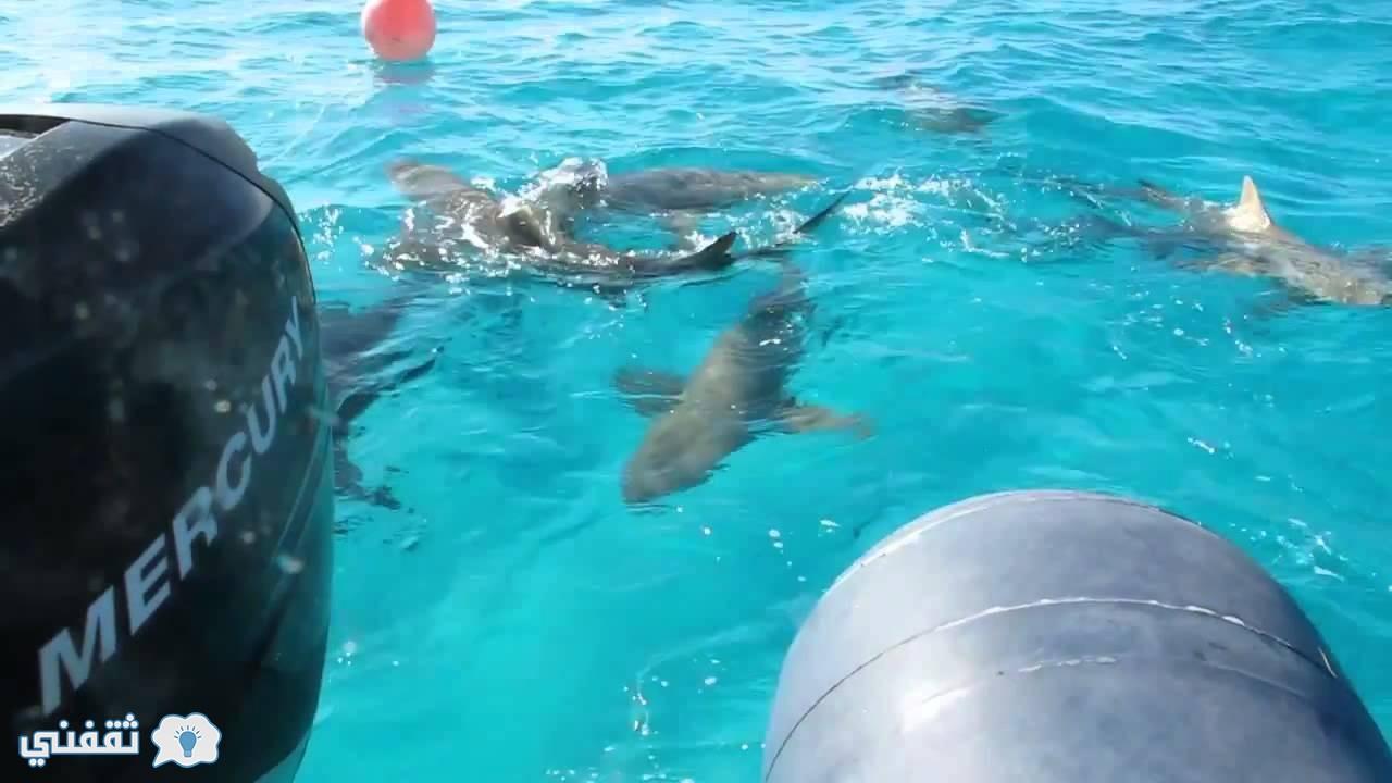 اسماك القرش