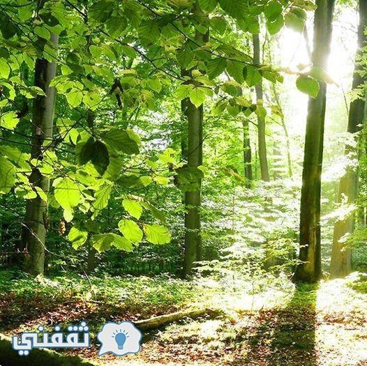 أغرب نبات يسمى نبات الانتحار من أخطر النباتات على وجه الأرض … احذروا نبات الانتحار الخطير