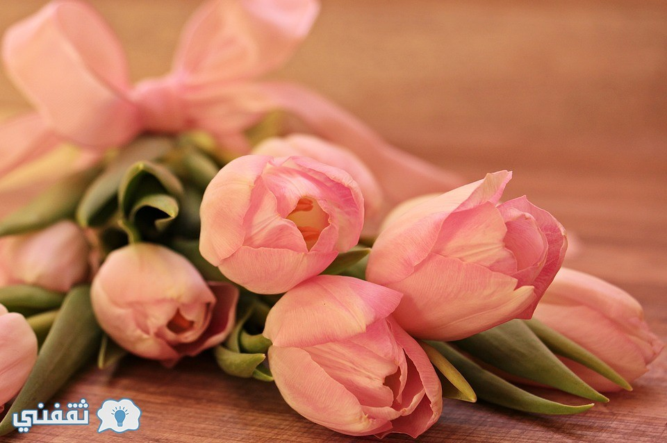 صور زهور
