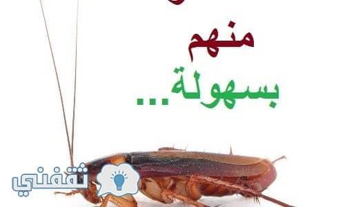 القضاء من الناموس والصراصير نهائيا بمكونات طبيعيه