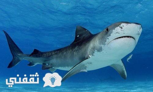 بالفيديو استمع إلي صوت الحوت المرعب ومعلومات عنه