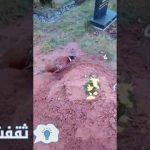 فيديو لقبر سيدة مسلمة كانت تسقي الطير و تطعمهم و توفيت شاهد وفاء الطير