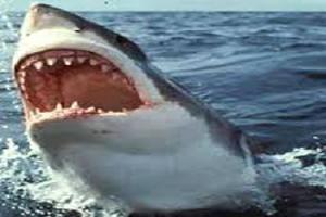 زعر المصيفين فى الغردقة بسبب القرش الابيض