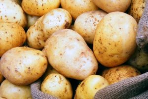 وزارة الزراعة تحذر من خطورة البطاطس على الأطفال والسيدات