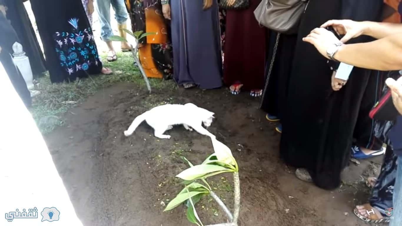 بعد وفاة صاحبها: قطة تُدهش حاضري الجنازة بما فعلته أمام قبر صاحبها وأحد الأقارب يروى ما فعلته فى اليوم الثانى للجنازة