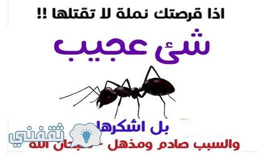 """إذا قرصتك """"نملة"""" لا تقتلها..بل اشكرها والسبب صادم ومذهل!! سبحان الله"""