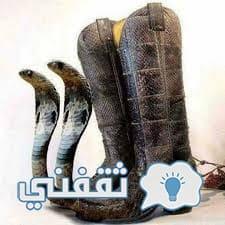 a4d6e169a تعرف على أغرب تصميمات الأحذية التي جعلت الطفرة الابتكارية جنونية وأذهلت  العالم