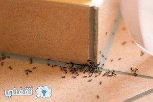 خمس طرق مفيدة لإبقاء النمل بعيداً عن منزلك و القضاء عليه نهائياً