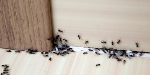 التخلص من الحشرات بدون مبيدات
