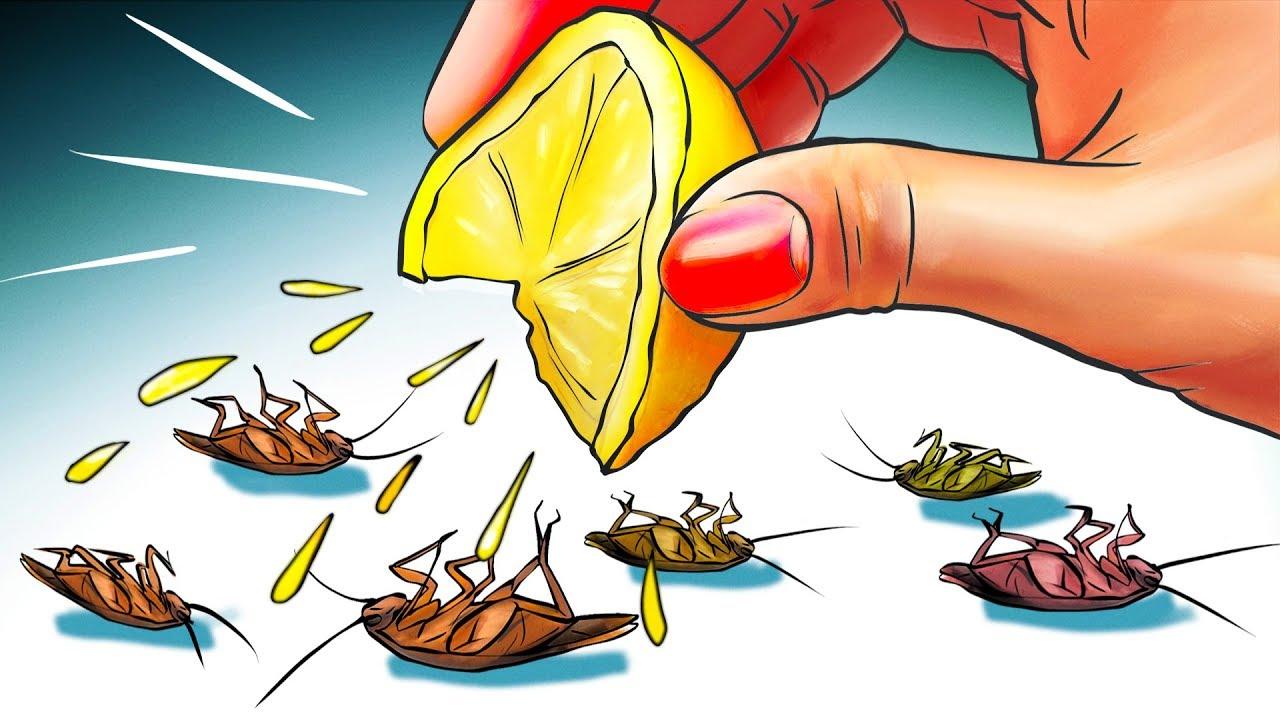التخلص من النمل و الصراصير
