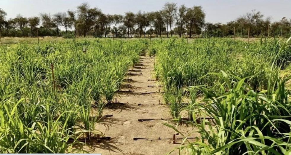 تحويل الصحراء الى زراعات خضراء