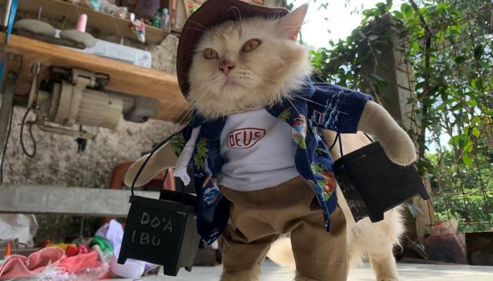 أين تختفي القطط في عيد الأضحى