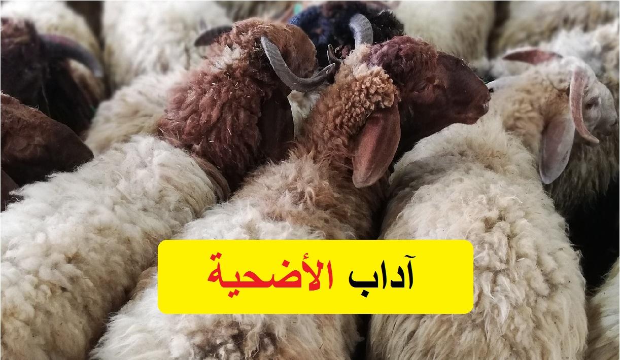 آداب ذبح الأضحية من دار الإفتاء المصرية في عيد الأضحى المبارك 2021