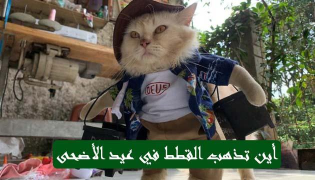 سبب-اختفاء-القطط-في-يوم-عيد-الأضحى