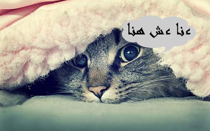 سبب-اختفاء-القطط-في-يوم-عيد-الأضحى-22222
