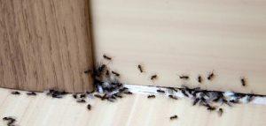القضاء على النمل نهائياً من خلال 4 وصفات منزلية سحرية