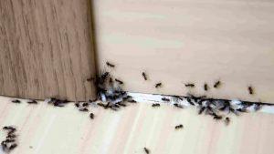 طرد العناكب والحشرات من المنزل